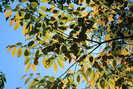 Tree, Sun Light, Nature, Sun, Forest, Sunlight, Sunny