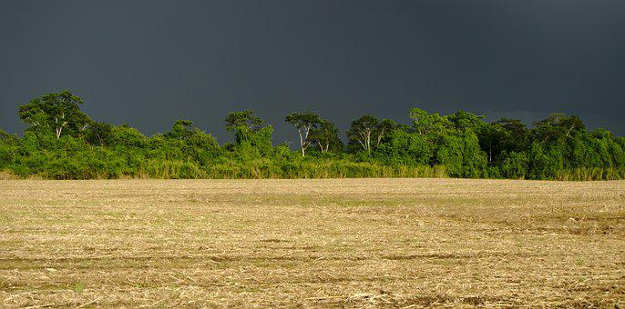 Field, Crop, Rural, Rain Clouds, Tree Line, Agriculture