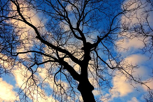 Tree, Tree Top, Branches, Bare Tree, Twisted, Gnarled