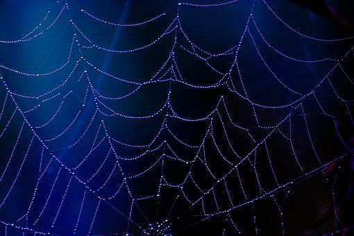 Spider, Web, Blue, Dew, Drops, Halloween, Scary, Horror