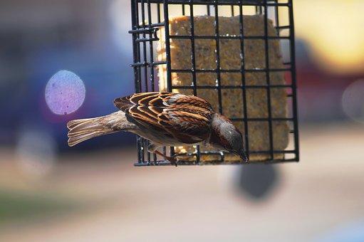 Wild Bird, Sparrow, Wildlife, Wild, Bird, Nature