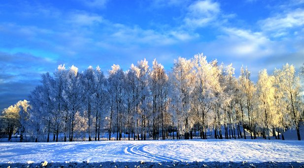 Winter, Snow, Snow Landscape, Frost, Winter Magic, Cold