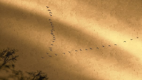 Bird Migration, Cranes, Migratory Birds, Animals, Fly