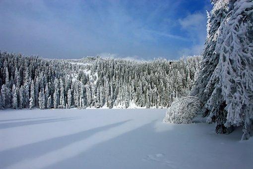 Winter, Snow, Wintry, Cold, White, Blue, Light, Frozen