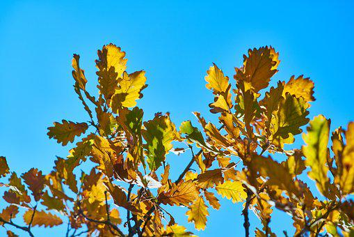 Leaves, Tree, Branch, Forest, Autumn, Macro, Blue