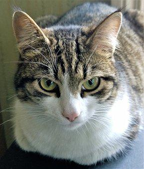 Cat, Pets, Animals, Cat Face, Cute Cat, Closeup