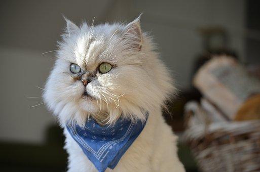 Cat, Beautiful, Beauty, Domestic Cat, Animal