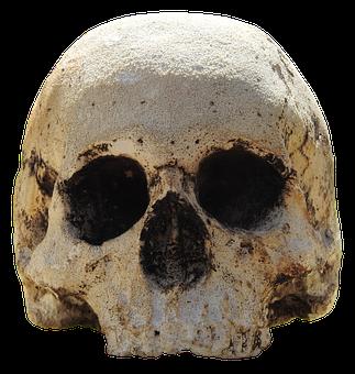 Skull, Head, Skull And Crossbones, Weird, Bone