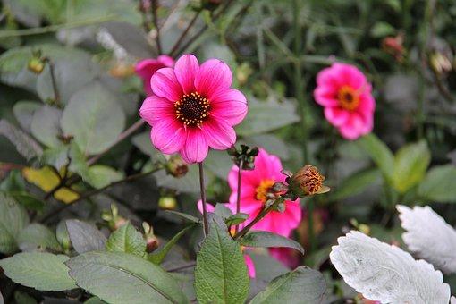 Flowers, Pink, Beautiful, Autumn, Leaf, Fall, Season