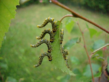 Larvae, Dance, Natural, Leaf