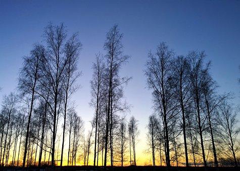 Sunset, Horizon, Landscapes, Tree, Himmel, Nature