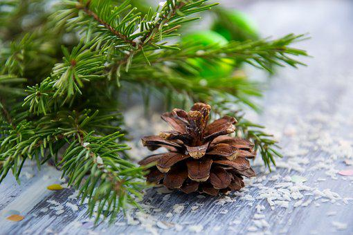 Christmas Background, Spruce Branch, New Year's Eve