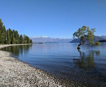 Wanaka, New Zealand, Lake, Tree, Scenic