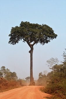 Bertholletia Excelsa, Brazil Nut, Nut Amazon