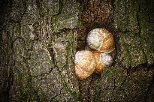 Snails, Tree, Shell, Mollusk, Snail, Nature, Close