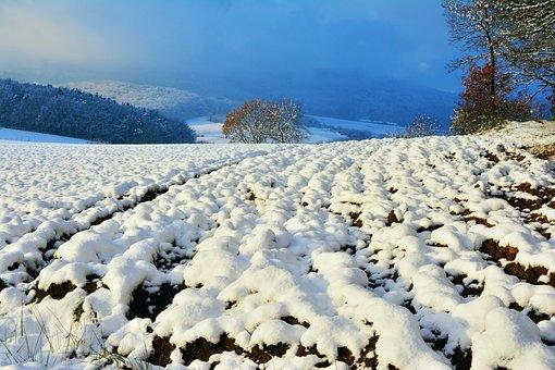 Wintry, Snow, Winter, Ackerfurchen, Snowy, Forest