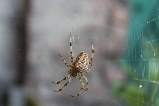 Spider, Spider Web, Nature, Insects, Living Nature
