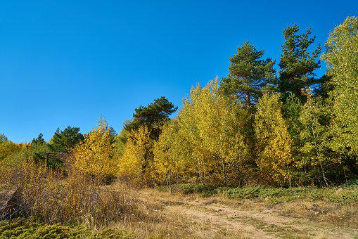 Forest, Tree, Branch, Autumn, Sky, Blue, Day, Sunny