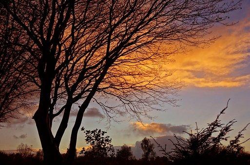 Sunset, Tree, Silhouette, Golden Glow, Twilight, Dusk