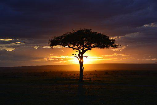 Africa, Sunset, Safari, Kenya, Mara, Tree, Sky, Clouds