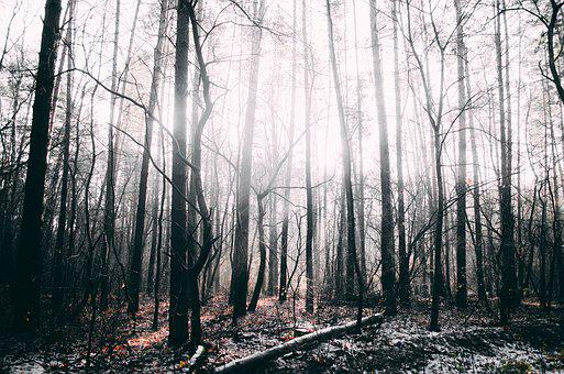 Forest, Trees, Nature, Winter Forest, Tree, Tree Trunks
