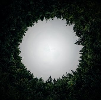 Circular, Forest, Dimension, Circle, Hole, Orb, Tunnel
