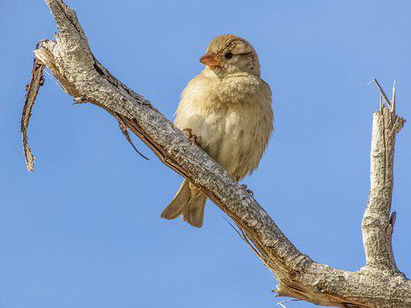 Sparrow, Bird, Wildlife, Feather, Nature, Animal, Cute