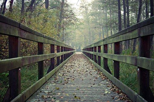 Bridge, Long, Wooden, Footbridge, Handrail, Forest