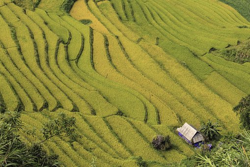 The House, Curve, Winding, Terraces, Cooked Rice