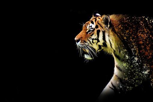 Tiger, Large, Discreet, Epic, Animal, Wildkatzte