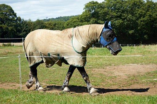 Horse, Equine, Breeding Horses, Breeding