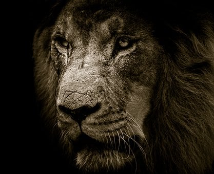 Lion, Mane, Eyes, King, Strength, Feline