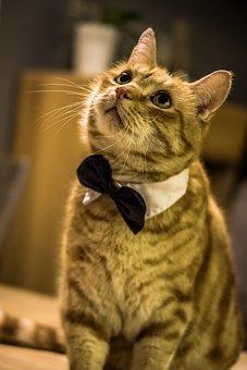 Cat, Mieze, Pet, Young Cat, Wildcat, Kitten, Animal