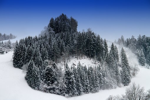 Winter, Snow, Trees, Landscape, Wintry, Snowy, Forest