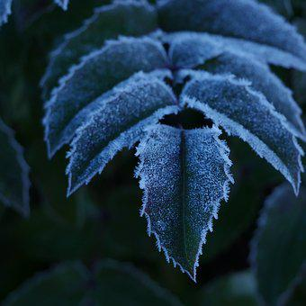 Frozen, Frost, Ice, Leaves, Plants, Cold, Nature