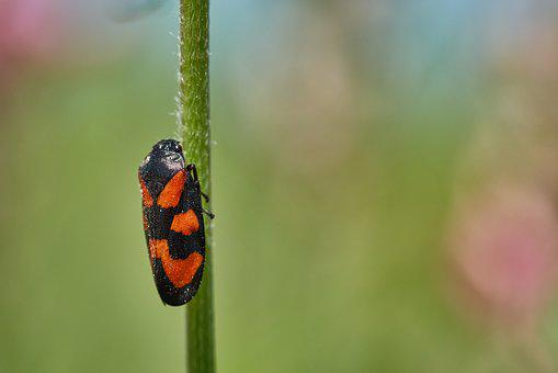 Blade Of Grass, Beetle, Red, Black, Macro, Small, Close