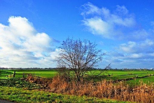 Tree, Meadow, Rural, Country, Farmland, Polder, Dutch