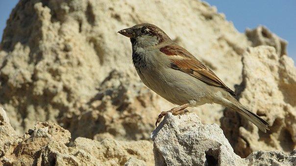 Sparrow, Bird, Wildlife, Nature, Animal, Cute, Sitting