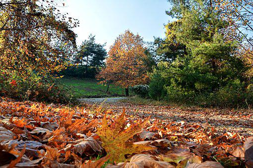 Autumn, Season, Nature, Beautiful, Outdoor, Landscape