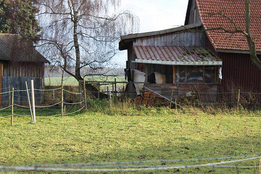 Horse, Stall, Horse Head, Shelter, Horse Stable