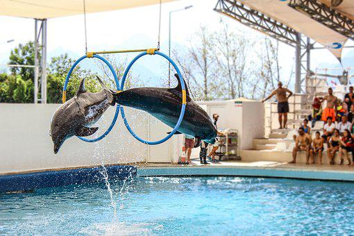 Dolphin, Dolphins, Show, Jump, Swimming Pool, Water