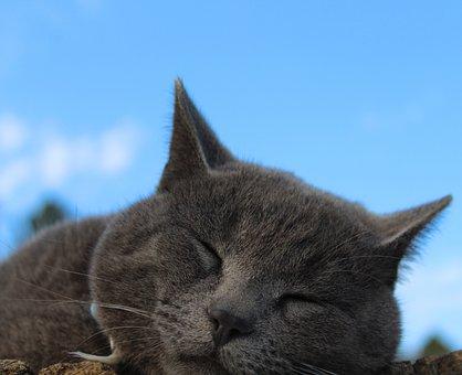 Cat, Sleeping, Sleepy, Blue Sky, Kitty