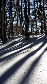 Snow, Shadow, Wood, Halla, Last, Climbing