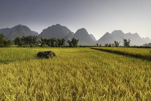 Rice, Vietnam, Plateau, Travel, Asian, Asia, Mountain