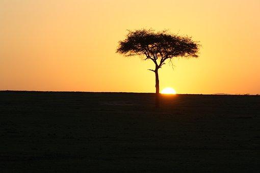 Masai Mara, Kenya, Sunset, Africa, Acacia, Tree