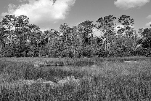 Florida Marshland, Wetland, Swamp, Nature, Landscape