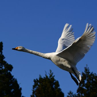 Animal, Sky, Wood, Bird, Wild Birds, Waterfowl, Fields