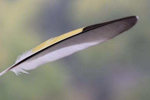 Bird, Nature, Animal, Ornithology, Yellow, Feather