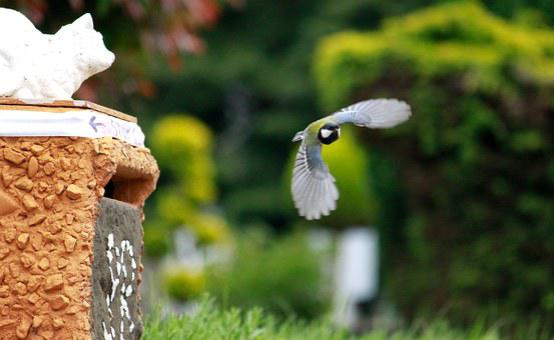 Tit, Bird, Fly, Flight, Feed, Animals, Nature