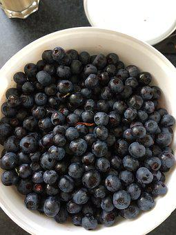 Blueberries, Berry Picking, Blueberry Bucket